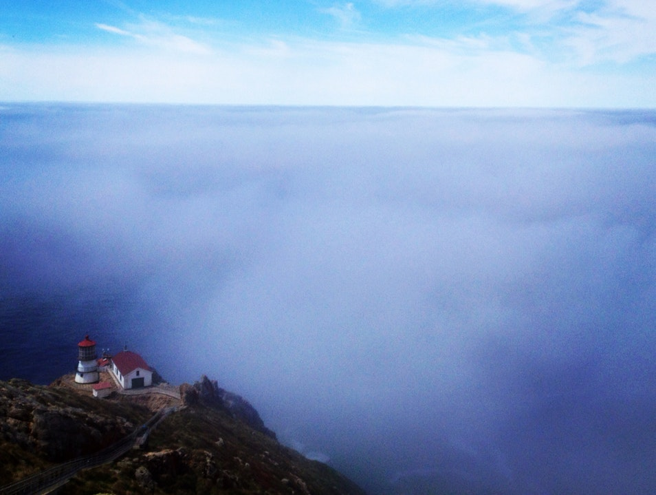 Whale Watching Above The Clouds