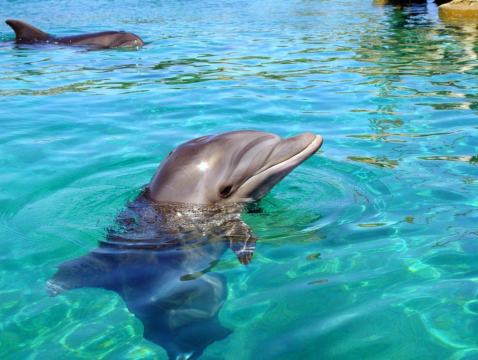 Dolphin Safari Tour in Key West Key West Florida United States