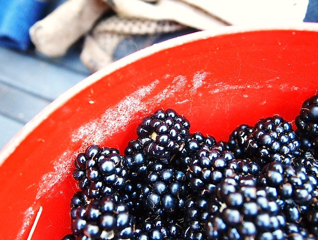 Seattle Suburb Blackberry Picking