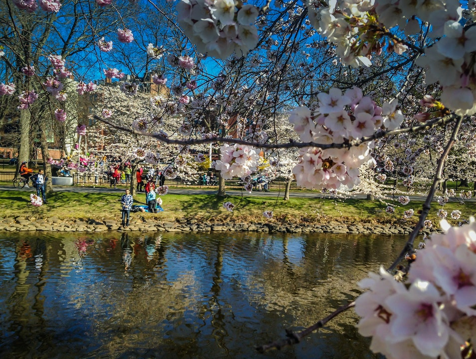 Of Cherry Blossoms and Fishing Boston Massachusetts United States