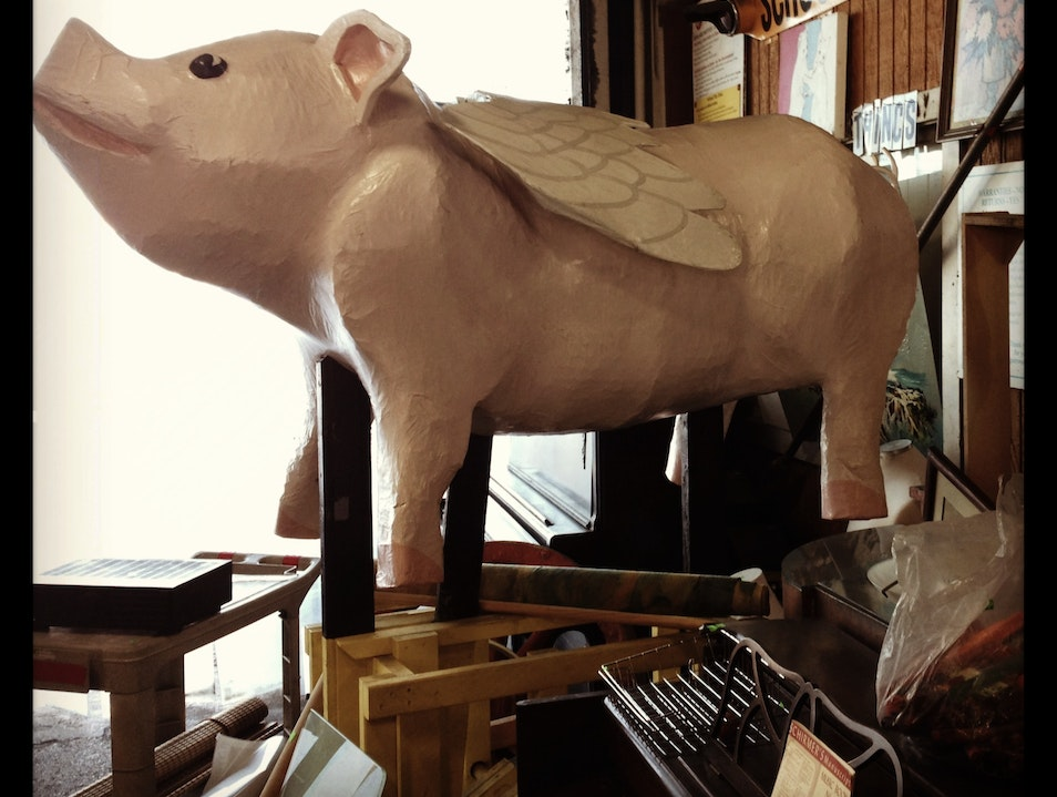 Where Pigs Really Do Fly