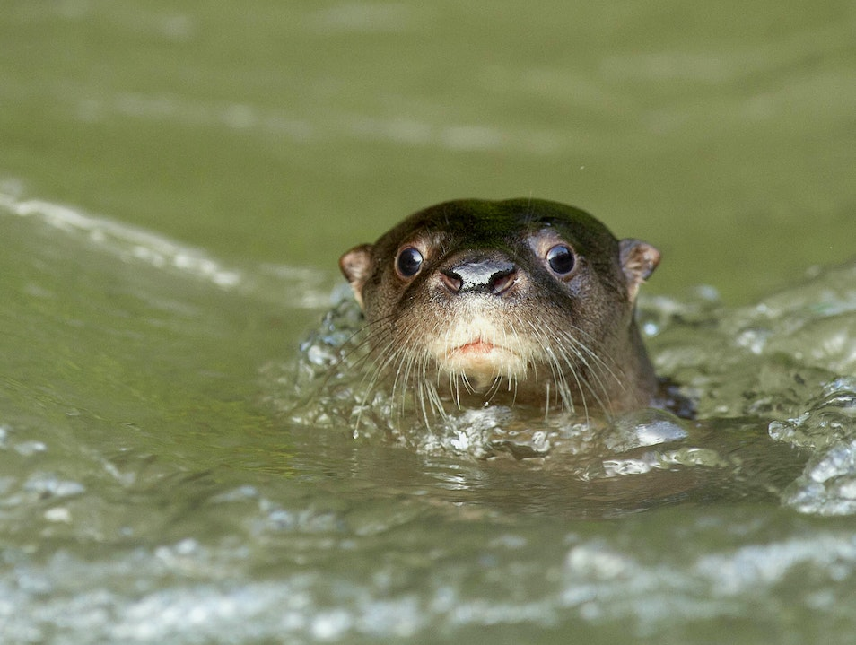 Peeping from the water
