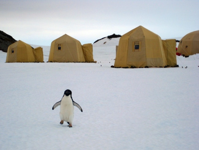 Antarctica: Up Close and Personal With Jacada Travel