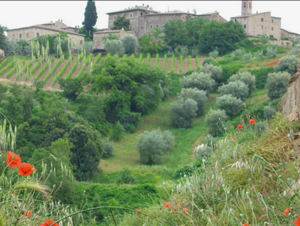 Austere Sounds of the Monks in Montalcino Castelnuovo Dell'abate  Italy