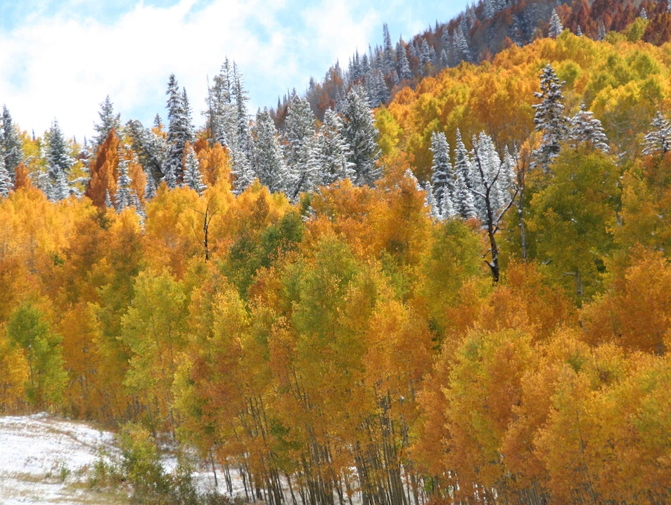 An Explosion of Fall Colors