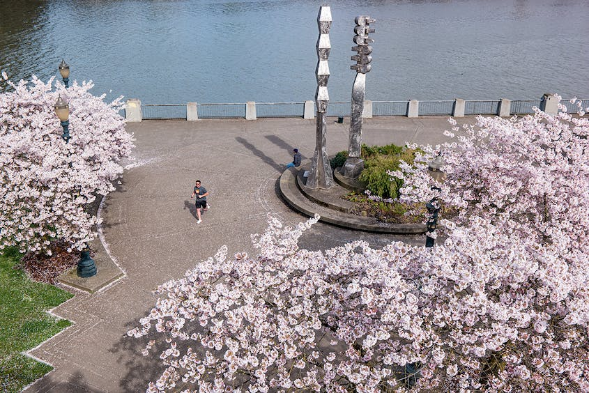 Built to honor those who were deported to Japanese internment camps during World War II, the Tom McCall Waterfront Park is the best place in Portland to see cherry blossoms.