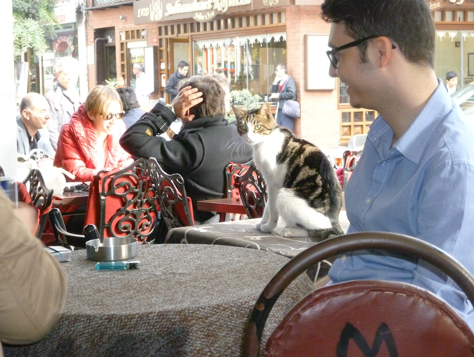 Cafes and Cats in Istanbul