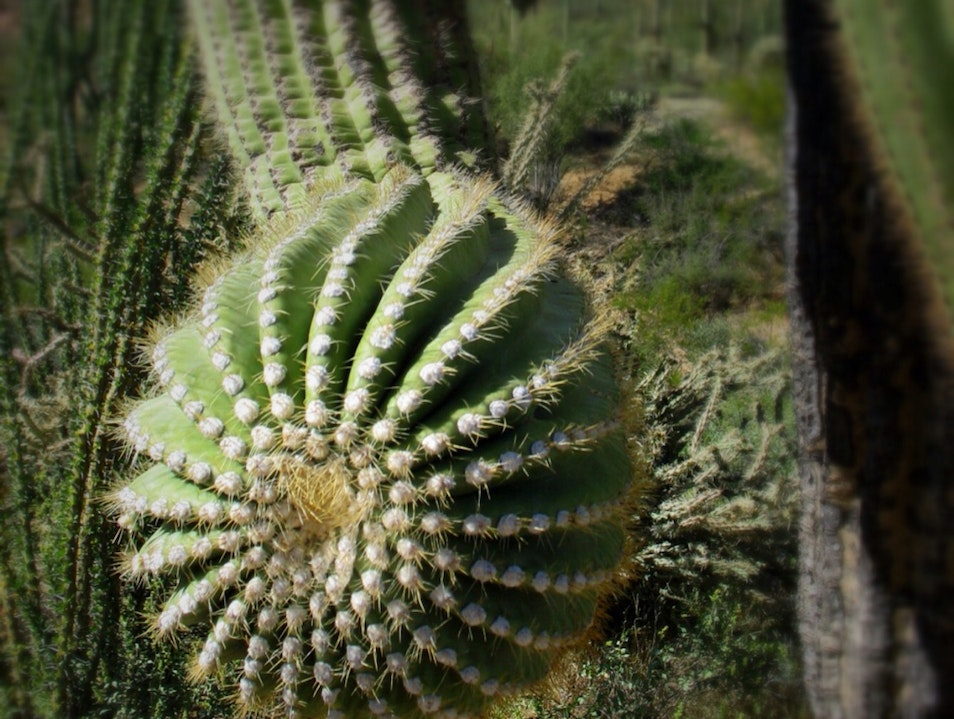 Up Close with a Desert Icon Tucson Arizona United States