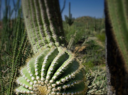 Saguaro National Park West Tucson Arizona United States