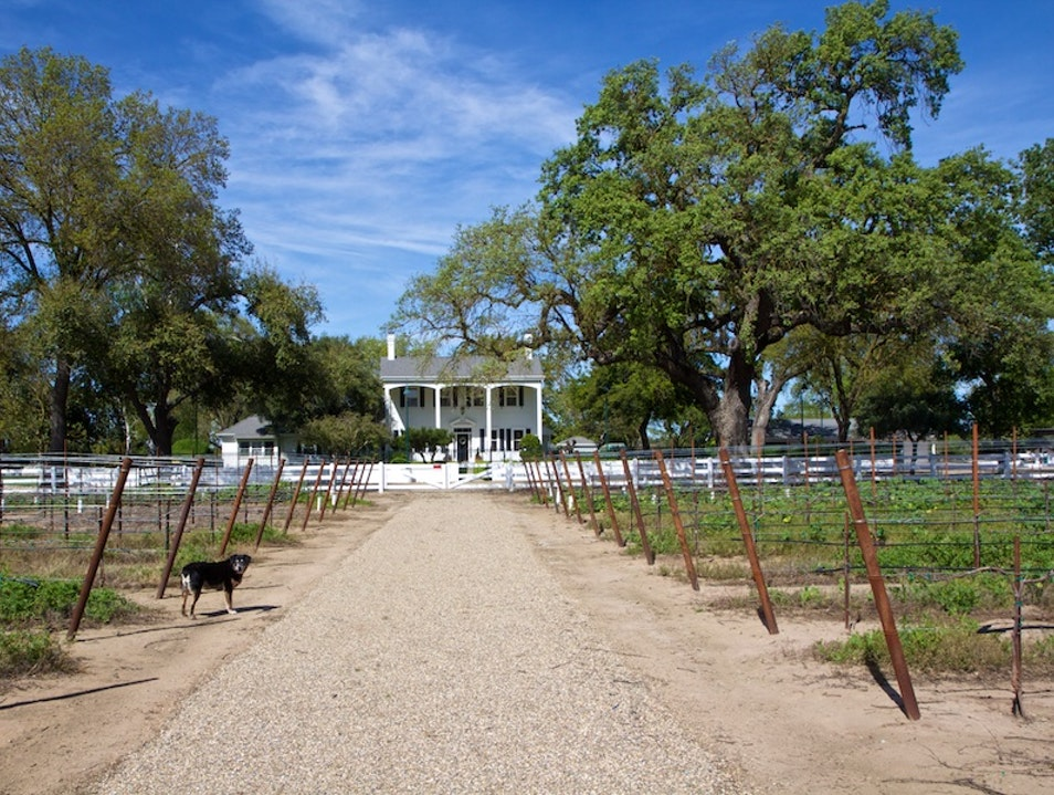 Oak Farm Vineyard for Big Zins Lodi California United States