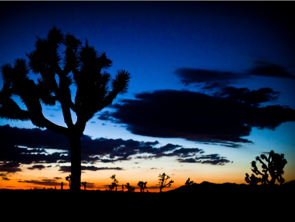 "Pish Posh on the ""Off"" Season Joshua Tree National Park California United States"