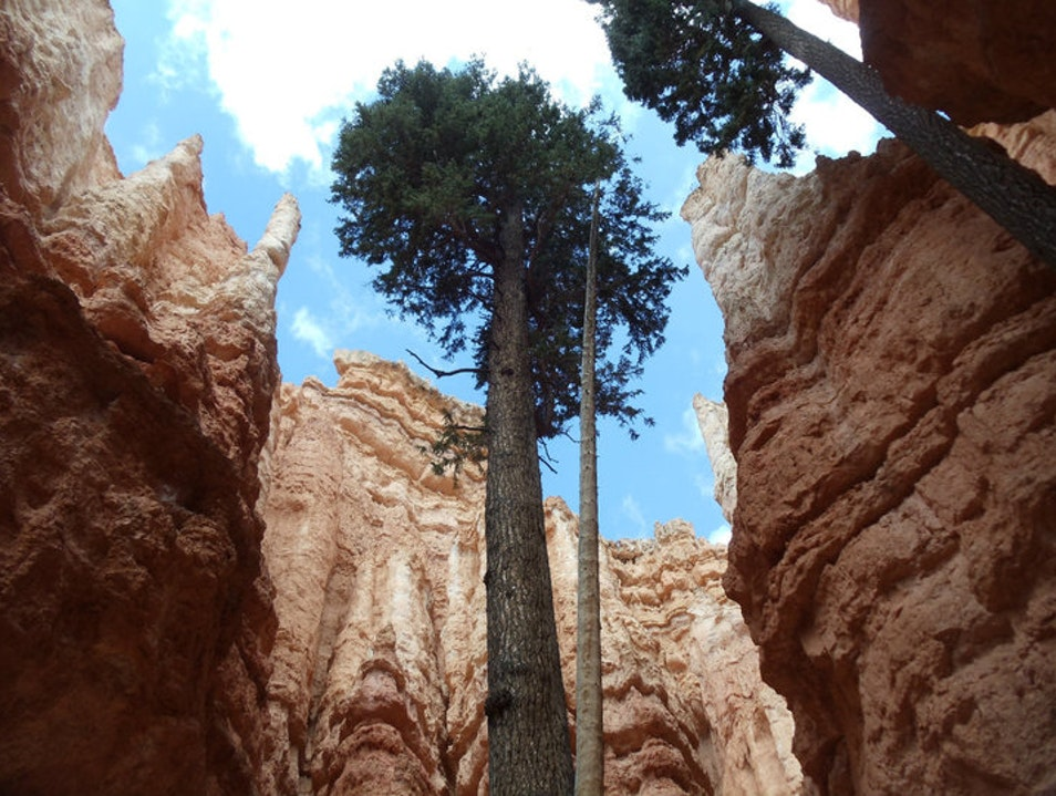 Bottom of Bryce Canyon