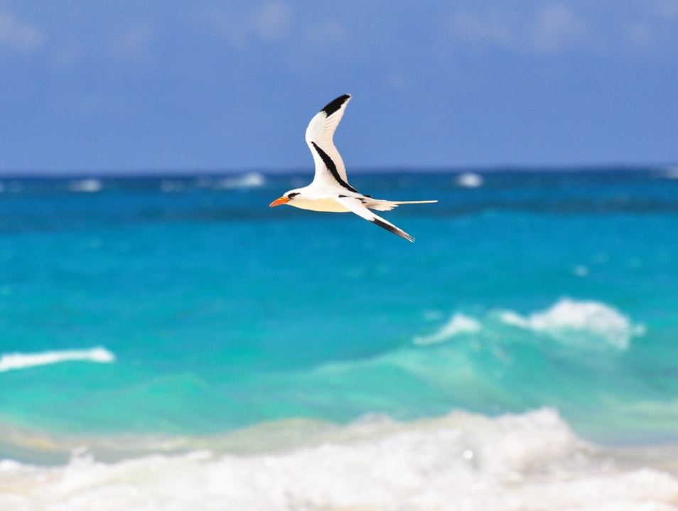 Birdwatching by the Beach Devonshire  Bermuda
