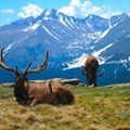 Rocky Mountain National Park Estes Park Colorado United States