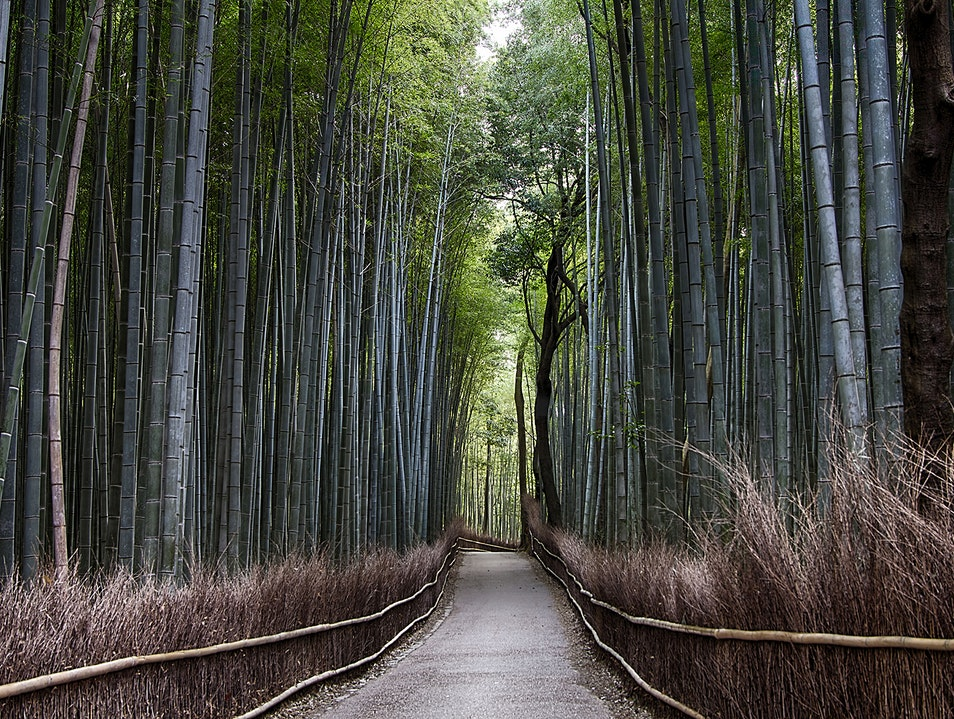 The Bamboo Grove Kyoto  Japan