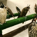 Abu Dhabi Falcon Hospital أبو ظبي  United Arab Emirates