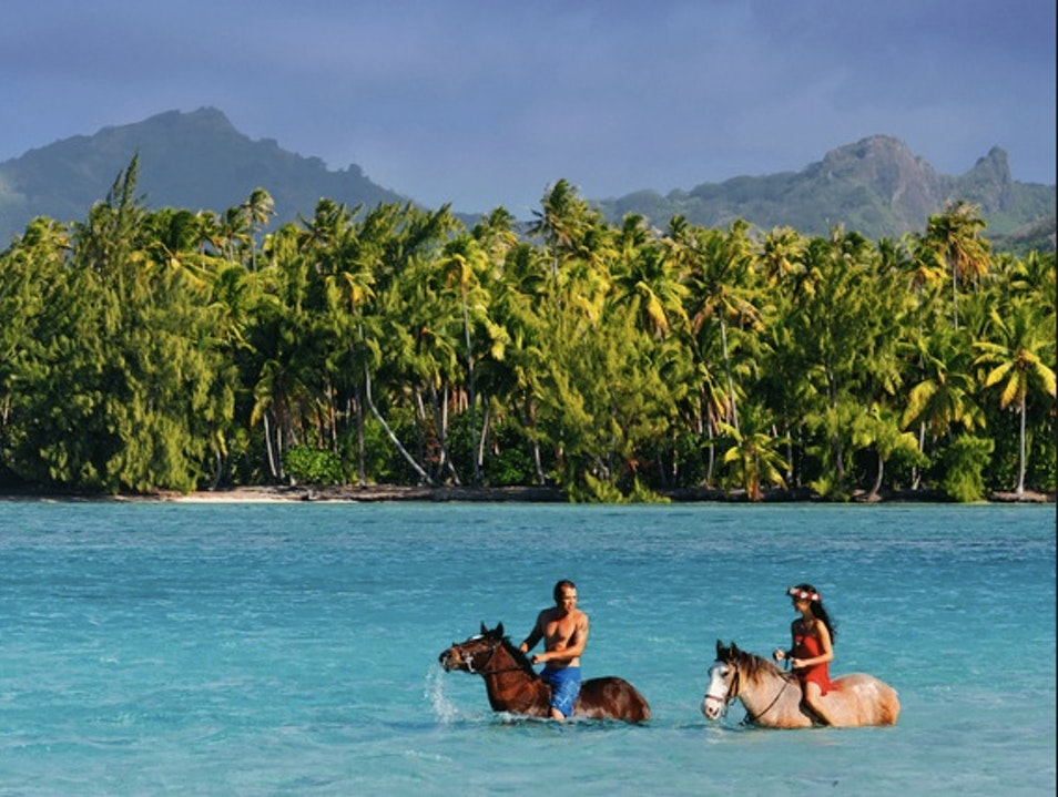 Swim with Horses on an Excursion with La Petite Firme Îles Sous Le Vent  French Polynesia