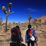 Joshua Tree Uprising Adventure Guides