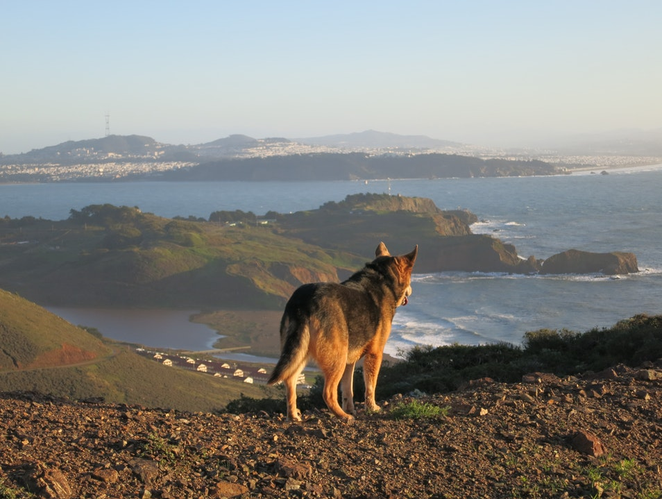 Get Away from the City for a Day on Public Transit Sausalito California United States