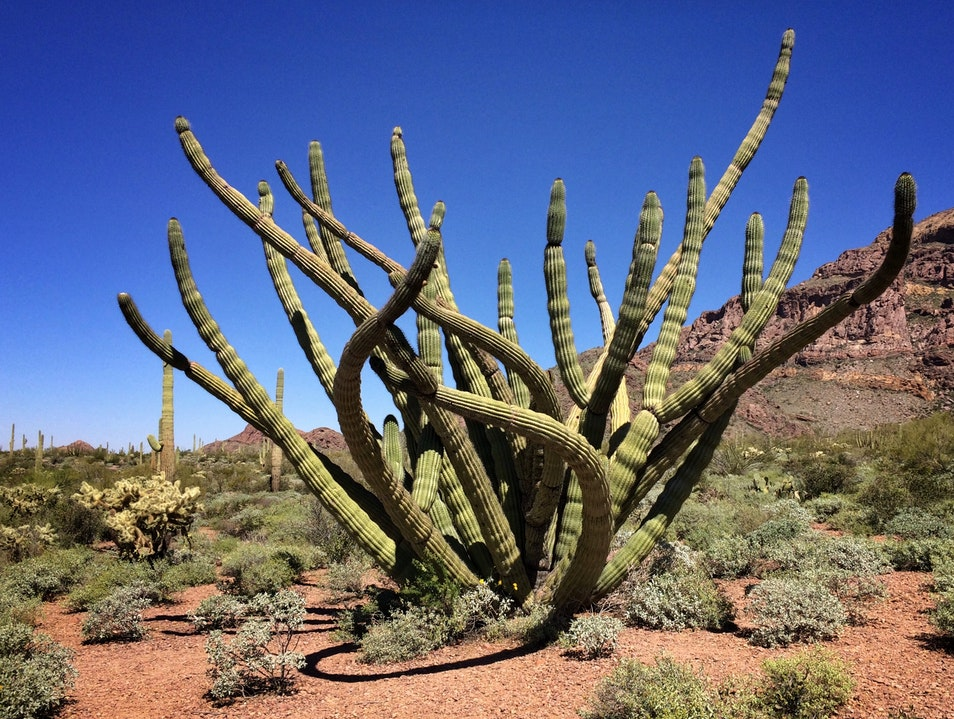 Organ Pipe National Monument, like nowhere else in the U.S.