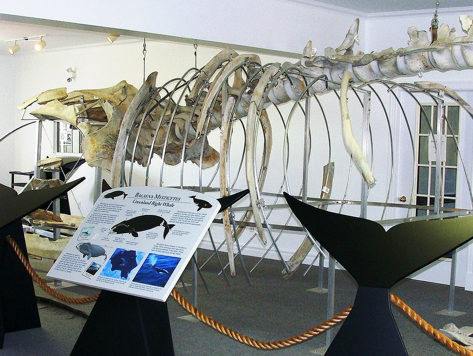 Right Whale Exhibit Museum Red Bay  Canada