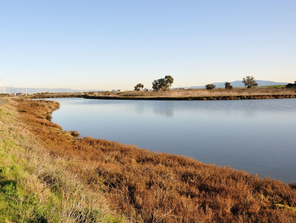 Meander through the Marsh Palo Alto California United States