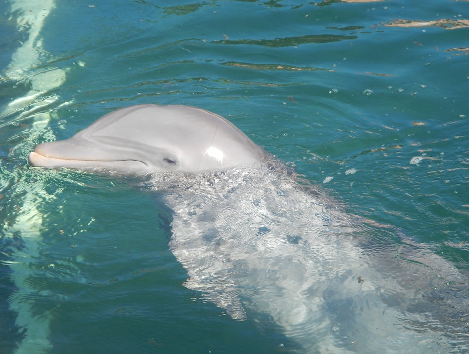 To swim with dolphins is the most beautiful and exhilarating experience ever!