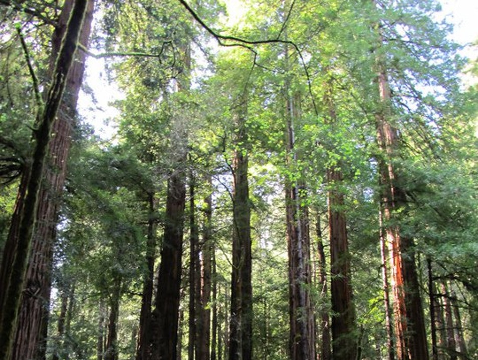 Take a break from the City and explore Muir Woods while visiting San Fran  Mill Valley California United States