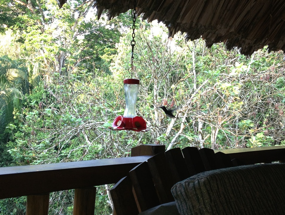 hummingbirds Cayo  Belize