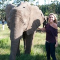 Knysna Elephant Park Greater Plettenberg Bay  South Africa