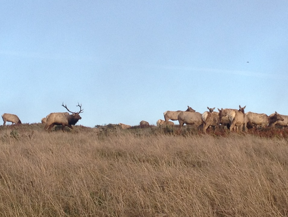 Take a Walk with Elk Inverness California United States