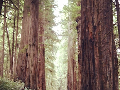 Redwood National Park Orick California United States