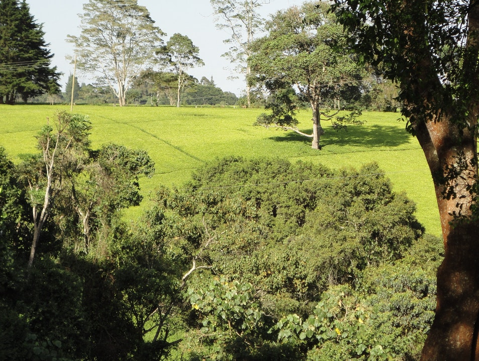 Tea Plantation: cuppa with a view