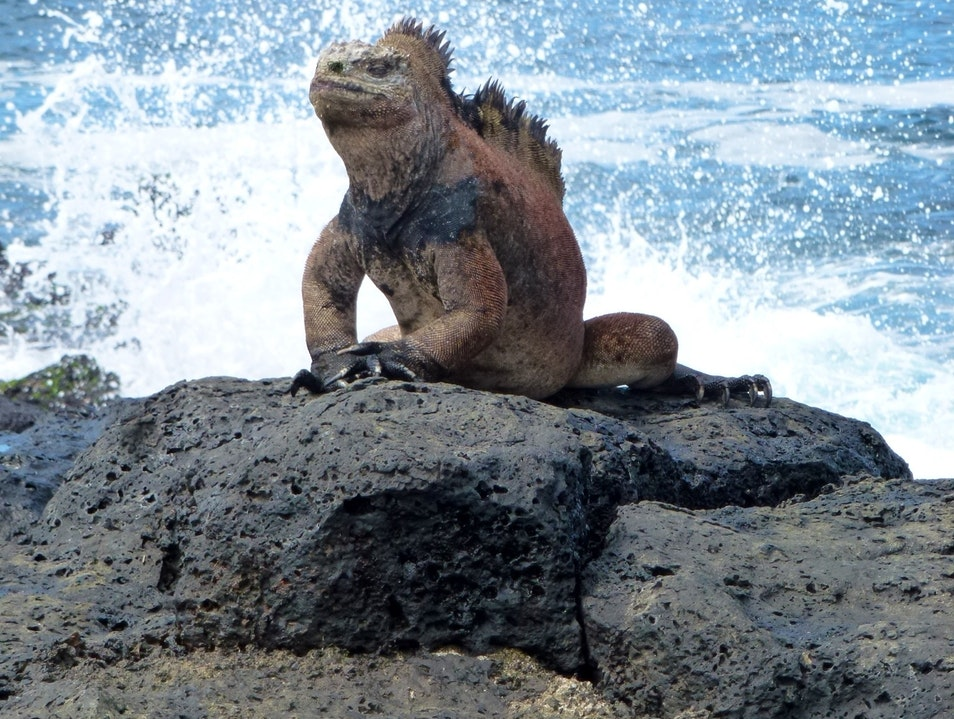 King of the world Galápagos Islands  Ecuador