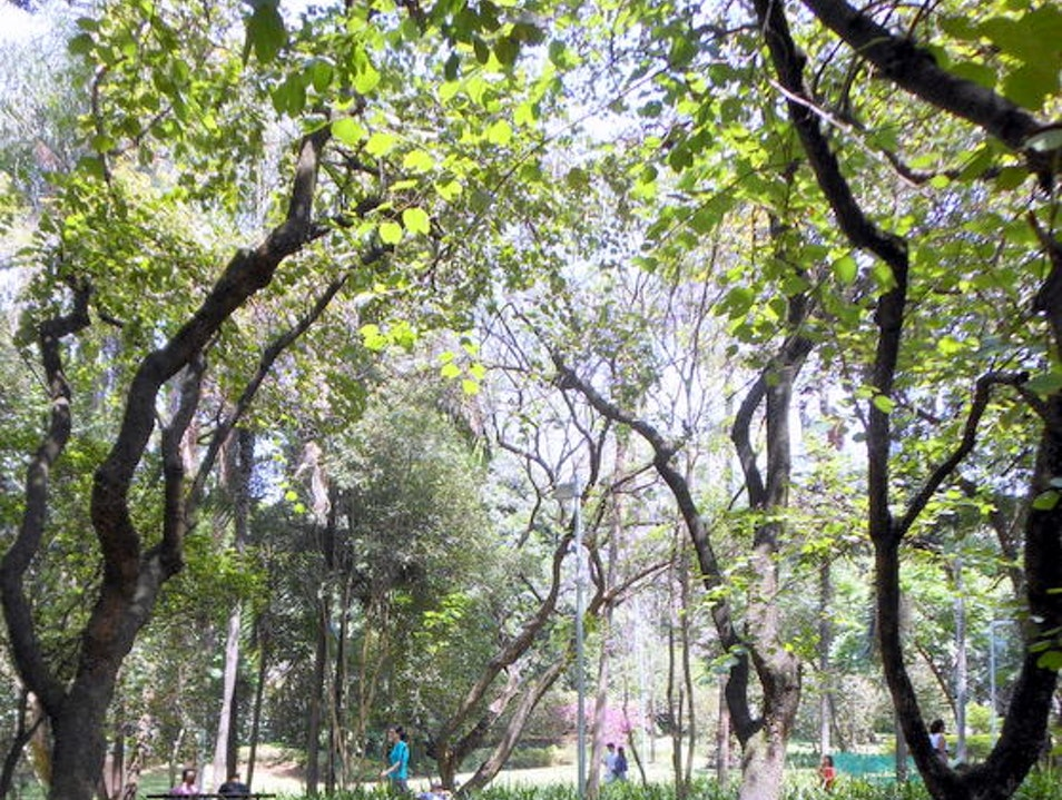 A beautiful park in Higeonópolis