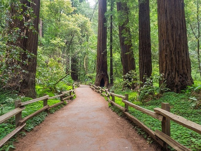 Muir Woods National Monument San Francisco California United States