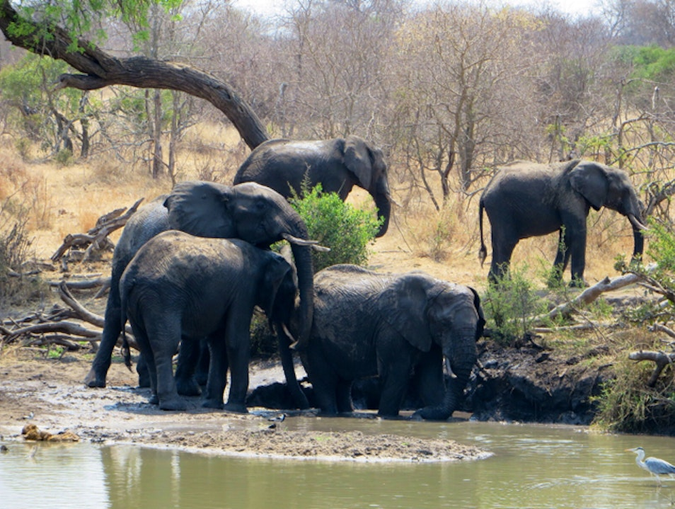 A Safari to Remember Hoedspruit  South Africa