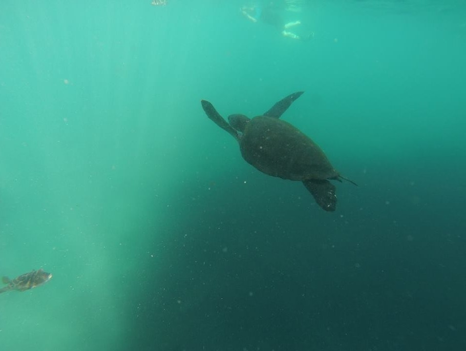 Swimming with sea Turtles in the Galapagos