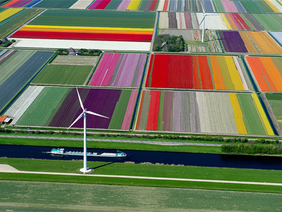 Tulipmania: CRAYOLA, Eat Your Heart Out! Anna Paulowna  The Netherlands