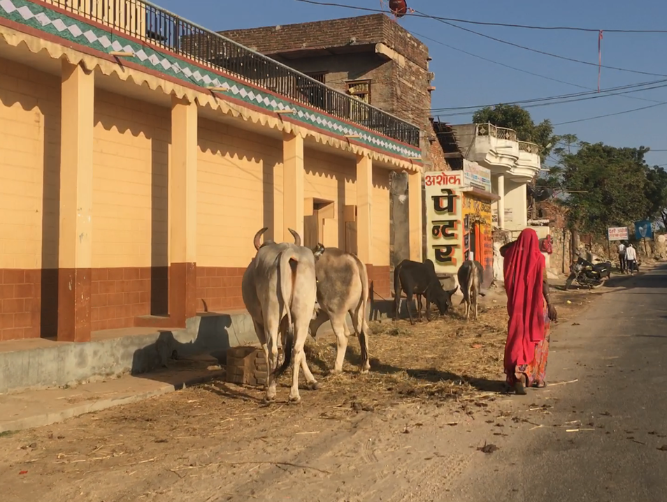 The Road to Ranakpur