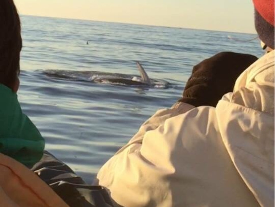 Great whale watching experience