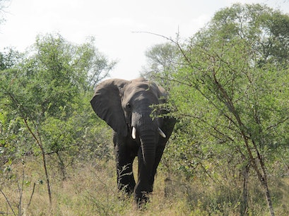 Kruger National Park, Kruger Park Kruger Park  South Africa