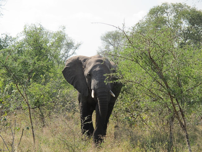 Kruger Park - looking for elephants