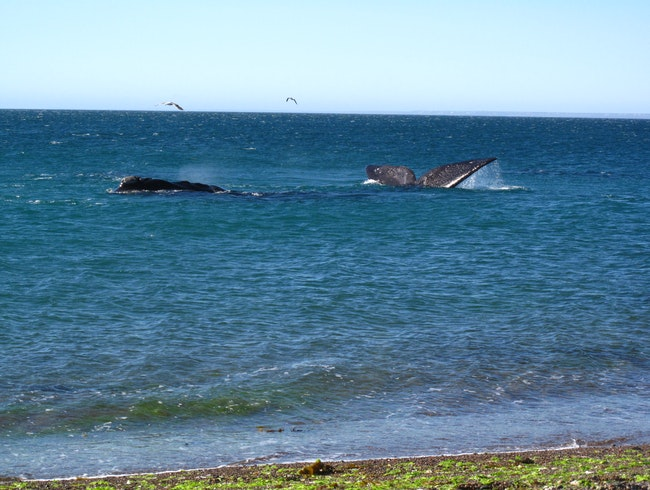 Watching Whales People Watch, Puerto Madryn, Argentina