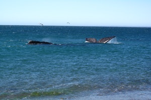Puerto Madryn, Chubut Province