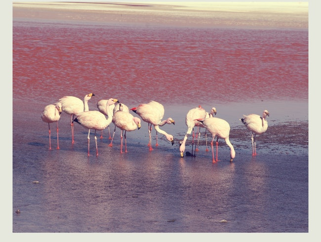 Red Lagoons, Violet Skies, Pink Flamingos