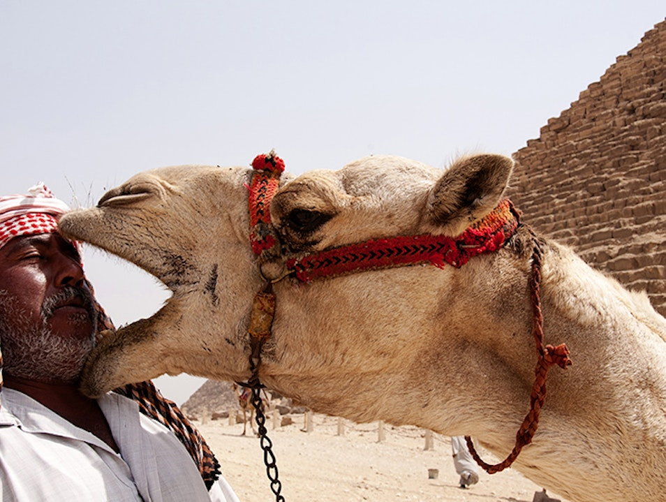 Get your face eaten by a camel