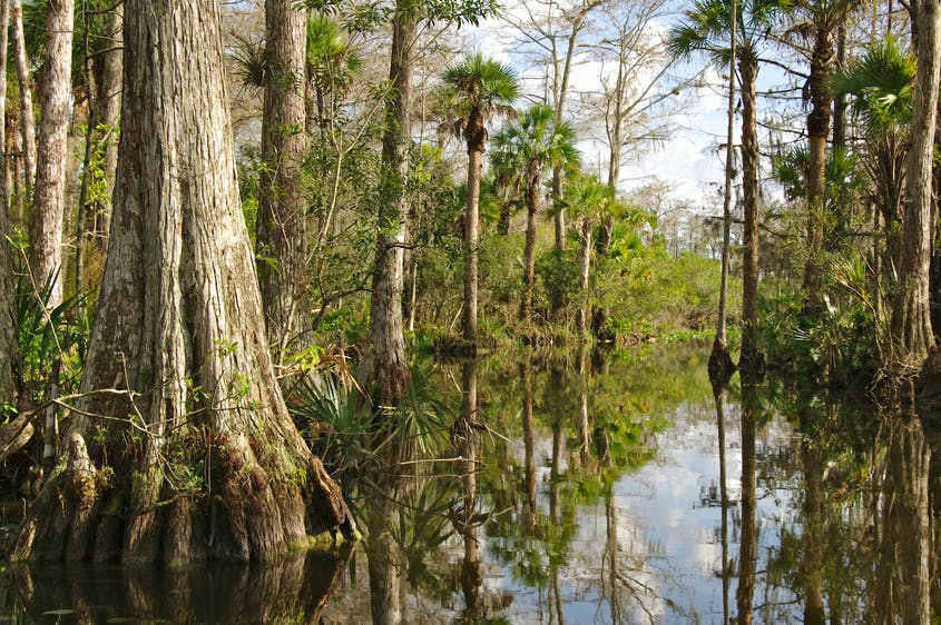 Numerous trails and areas of Everglades National Park reopened this month.