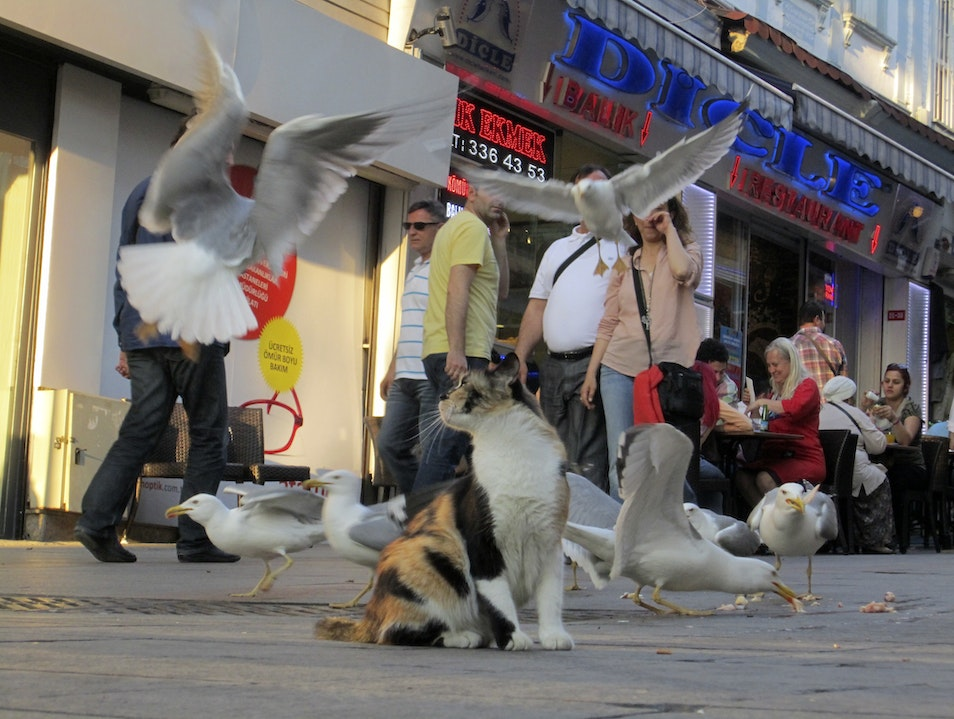 Local Life in Istanbul