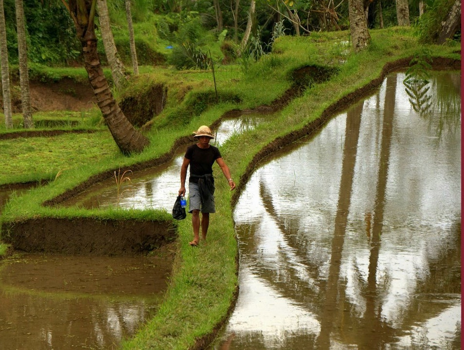 Walk through the rice fields in Bali